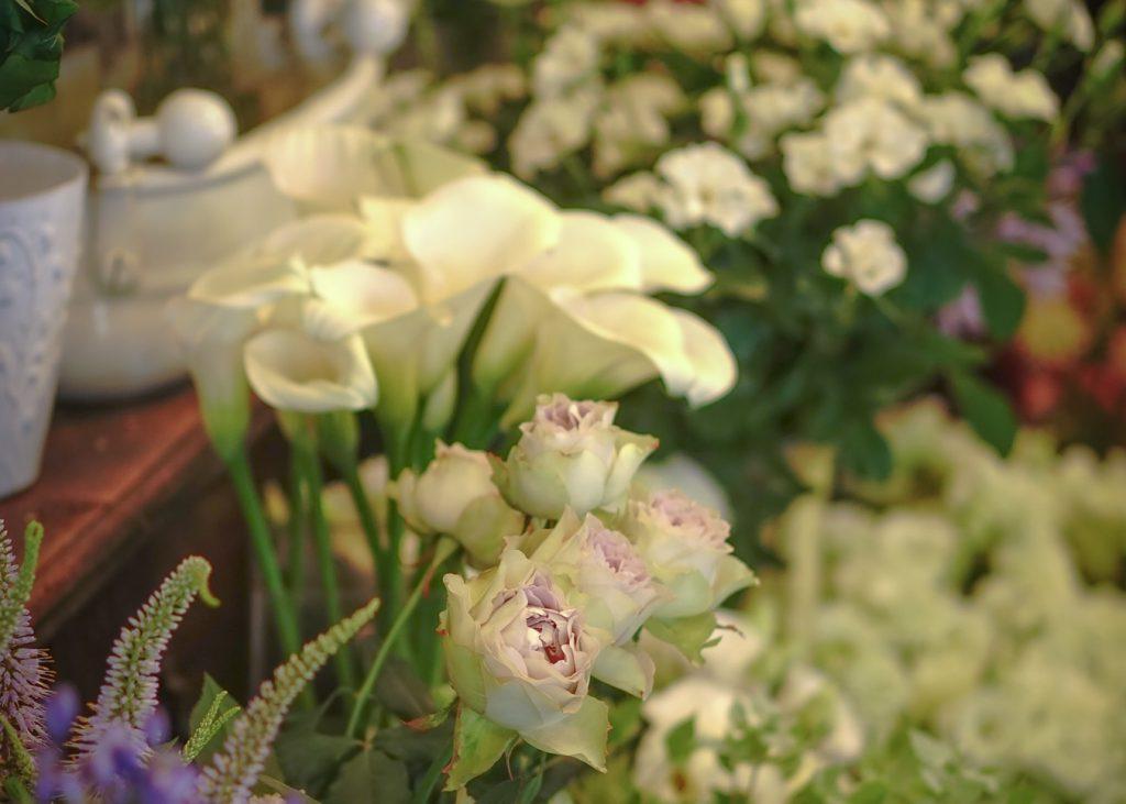 Whiteflowersharu